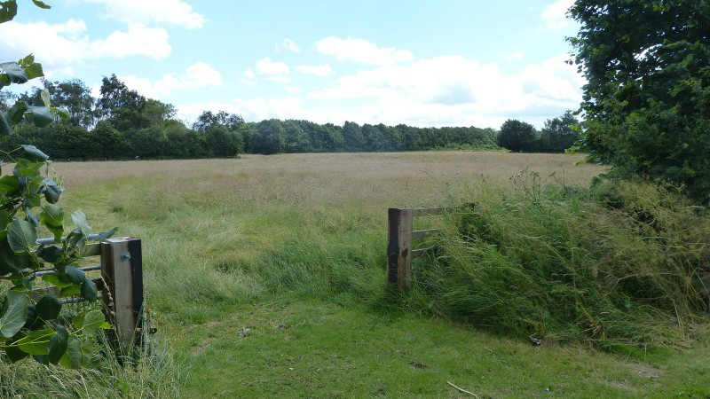Meadow at Elms Farm Costock